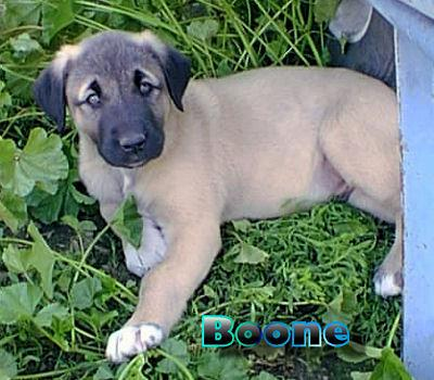 Baby Boone