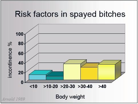 Risk factors, prepuberty female dogs