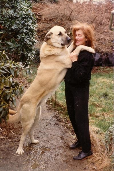Natalka with Anadol Yali of Hisar (sire: Capar of Anadol from Seacop x dam: Korumak Tyana of Anadol)