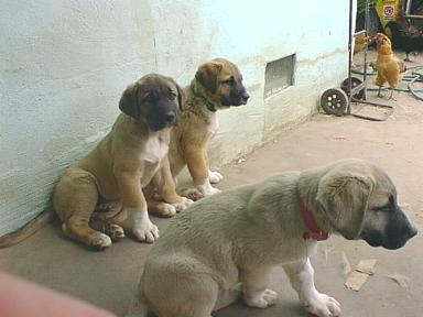 [ Pups resting on the porch ]
