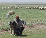 Turkish Shepherd